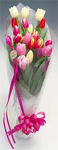 チューリップ花束20本