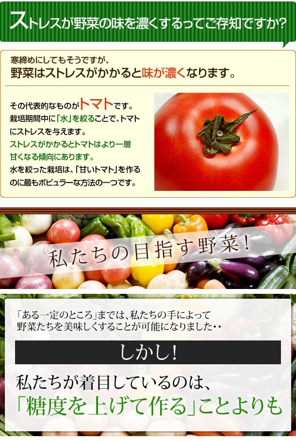 ■ストレスが野菜の味を濃くするってご存知ですか?寒締めにしてもそうですが、野菜はストレスがかかると味が濃くなります。その代表的なものがトマトです。栽培期間中に「水」を絞ることで、トマトにストレスを与えます。ストレスがかかるとトマトはより一層甘くなる傾向にあります。水を絞った栽培は、「甘いトマト」を作るのに最もポピュラーな方法の一つです。■私たちの目指す野菜!「ある一定のところ」までは、私たちの手によって野菜たちを美味しくすることが可能になりました。しかし、私たちが着目しているのは、糖度を上げて作ることよりも「野菜本来の風味」を出すことなのです。