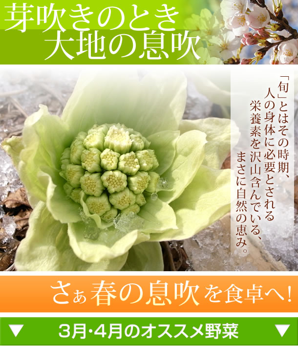芽吹きのとき 大地の息吹 春の息吹を食卓へ!3月・4月のオススメ野菜