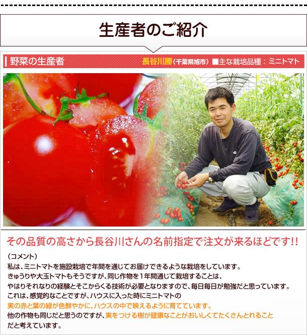 長谷川勝(千葉県旭市)■主な栽培品種:ミニトマト■ミニトマト栽培の匠!その品質の高さから長谷川さんの名前指定で注文が来るほどです!!●コメント私は、ミニトマトを施設栽培で年間を通じてお届けできるような栽培をしています。きゅうりや大玉トマトもそうですが、同じ作物を1年間通じて栽培することは、やはりそれなりの経験とそこからくる技術が必要となりますので、毎日毎日が勉強だと思っています。これは、感覚的なことですが、ハウスに入った時にミニトマトの実の赤と葉の緑が色鮮やかに、ハウスの中で映えるように育てています。他の作物も同じだと思うのですが、実をつける樹が健康なことがおいしくてたくさんとれることだと考えています。