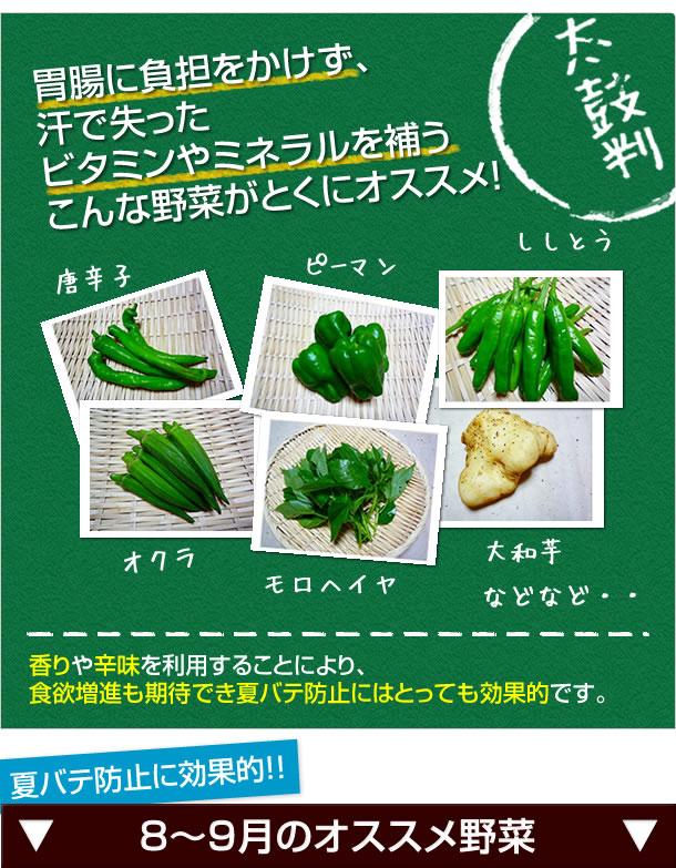 そんな方は胃腸に負担をかけず、汗で失ったビタミンやミネラルを補うこんな野菜がオススメ。香りや辛味を利用することにより、食欲増進も期待でき夏バテ防止にはとっても効果的です。夏バテ防止に役立つこんな野菜はいかがでしょう・8月〜9月 オクラ、モロヘイヤ、大和芋、唐辛子類、ししとう、ピーマンなどなど