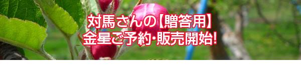 対馬さんの【贈答用】金星ご予約・販売開始!