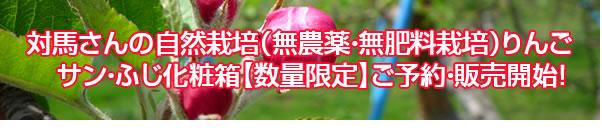 対馬さんの自然栽培(無農薬・無肥料栽培)りんご サン・ふじ化粧箱【数量限定】ご予約・販売開始!