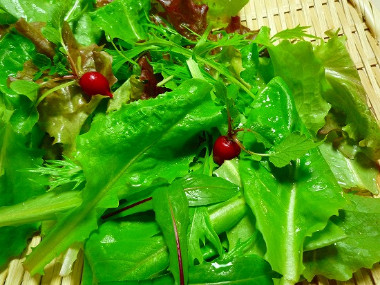 「京水菜」、「二十日大根」、「サニーレタス(青)」、「サニーレタス(赤)」、「サラダ菜」、「サラダ菜春菊」など人気のお野菜を幼葉のうちに摘み取ってミックスしたベビーリーフです