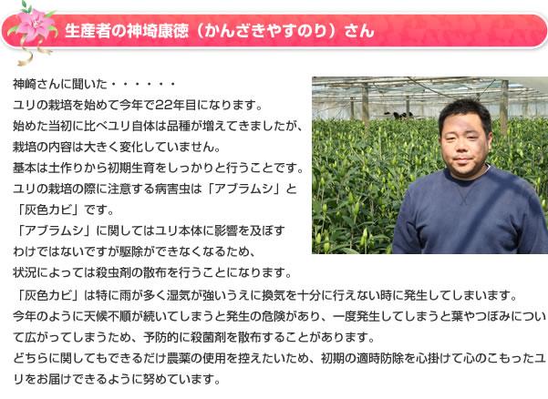 生産者の神埼康徳(かんざきやすのり)さん神崎さんに聞いた・・・・・・ユリの栽培を始めて今年で22年目になります。始めた当初に比べユリ自体は品種が増えてきましたが、栽培の内容は大きく変化していません。基本は土作りから初期生育をしっかりと行うことです。ユリの栽培の際に注意する病害虫は「アブラムシ」と「灰色カビ」です。「アブラムシ」に関してはユリ本体に影響を及ぼすわけではないですが駆除ができなくなるため、状況によっては殺虫剤の散布を行うことになります。「灰色カビ」は特に雨が多く湿気が強いうえに換気を十分に行えない時に発生してしまいます。今年のように天候不順が続いてしまうと発生の危険があり、一度発生してしまうと葉やつぼみについて広がってしまうため、予防的に殺菌剤を散布することがあります。どちらに関してもできるだけ農薬の使用を控えたいため、初期の適時防除を心掛けて心のこもったユリをお届けできるように努めています。