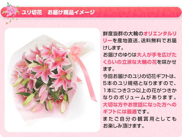 ユリの切花お届け商品イメージ。鮮度抜群のオリエンタルリリーを産地直送、送料無料でお届けします。お届けのユリは、大人が手を広げたくらいの立派な大輪の花を咲かせます。今回お届けのユリの切花ギフトは、5本のユリ規格となりますので、1本につき3つ以上の花がつきかなりのボリュームがあります。大切な方やお世話になった方へのギフトには最適です。またご自分の観賞用としてもお楽しみ頂けます。ユリの切花が到着後は、付属しているご案内の通りに日照と水を適度に与えることで開花いたします。