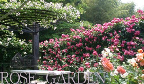 はなミュージック 庭の花達の開花情報をお知らせします