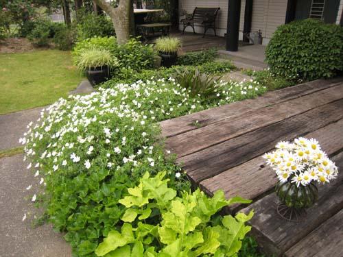 庭に咲く白い花は、ふうろう草