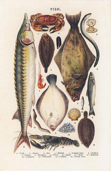 お菓子の絵 ビートン夫人 フィッシュ2 魚の絵