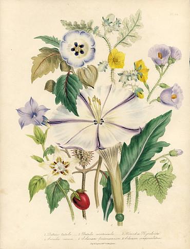 淑女の花園 Pl.46