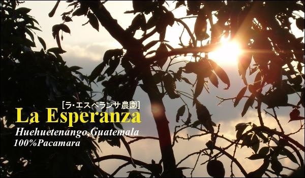 ラ・エスペランサ農園 グアテマラ