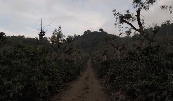 農園入口からの景色