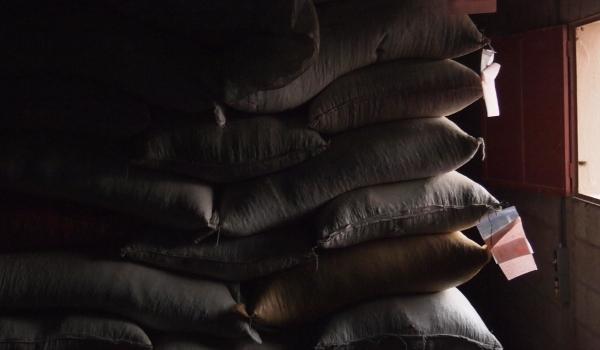 出荷を待つコーヒー豆