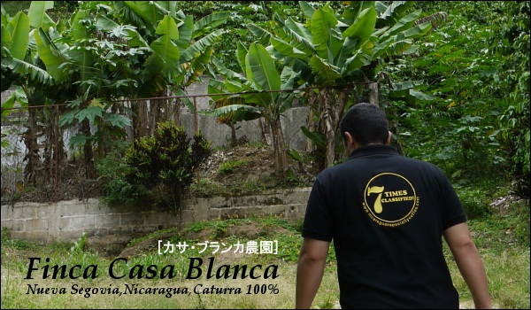 カサブランカ農園 ニカラグア カツーラ種