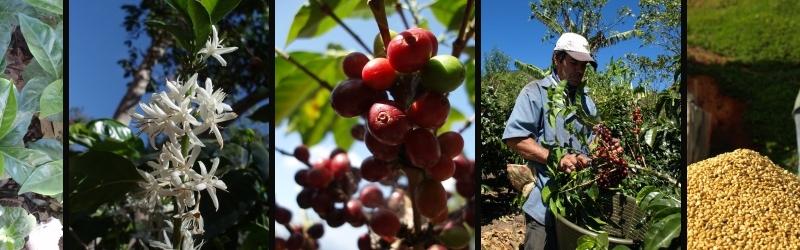 コーヒー研究室はコーヒー豆の最新情報を提供します