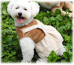 犬の服 ギンガムチェックワンピース