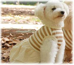 犬の服 スムースボーダーワンピース