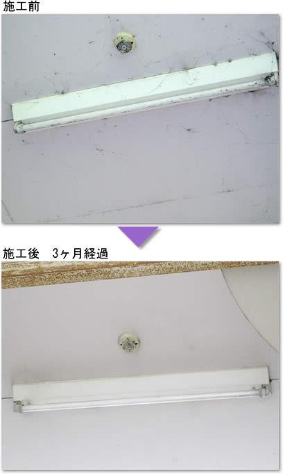 クモの巣対策